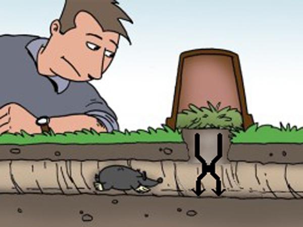 Так как избавиться от крота в саду